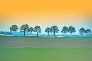 Sunset view of rows of trees near road over green wheat agricultural field summer landscape in rural area in Germany, Europe