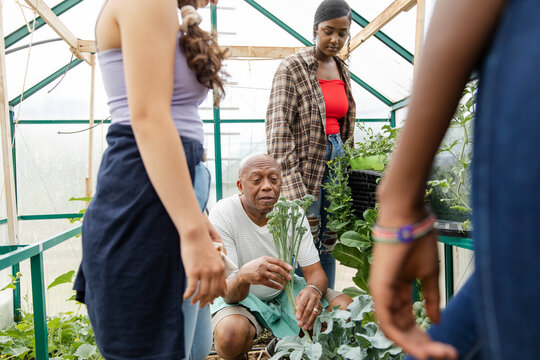Senior man teaching students in greenhouse