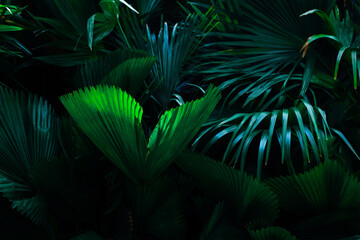Wall Mural - closeup nature view of tropical leaf background, dark tone concept