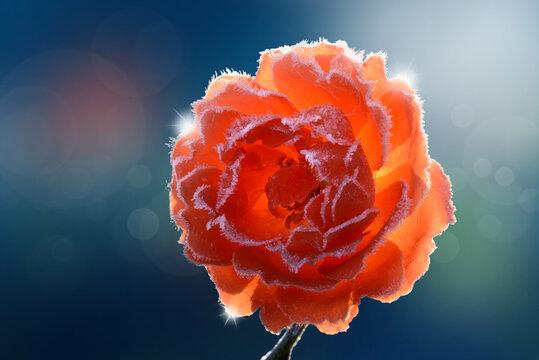 Blumen 1291