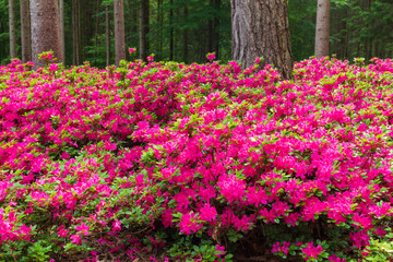 Beautiful pink flowers in a wild forest