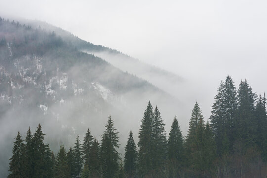 Winter Carpathian mountains in cloudy weather with foggy forests