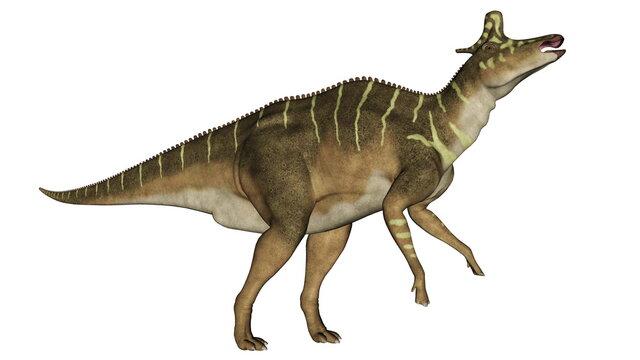 Lambeosaurus dinosaur eating head up isolated in white background - 3D render