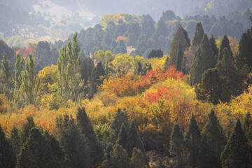 Fototapeta The fantastic view colorful in Fall season with light foggy. Beautiful colorful autumn landscape with a forest in toned colors. Impressive Autumn landscape during sunset. Concept of an ideal resting p obraz