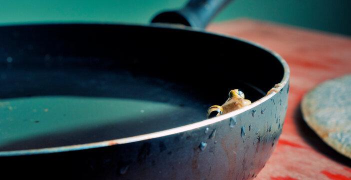 frog in a saucepan