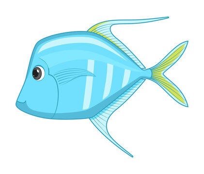 Lookdown fish on a white background