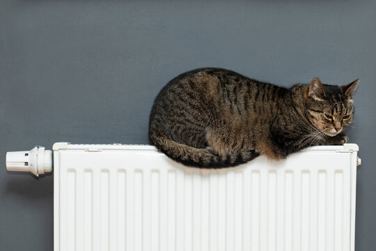 Cat on the radiator , cat lying on warm radiator rests and relaxes