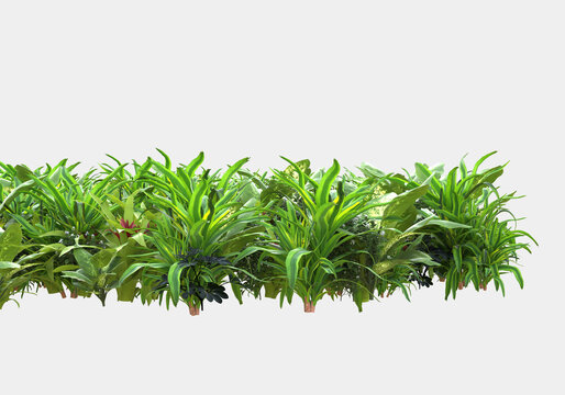 Decorative park and garden plants isolated on grey background. 3d rendering - illustration
