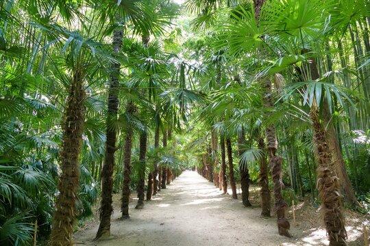 Allée de palmiers dans le parc de la bambouseraie d'Anduze