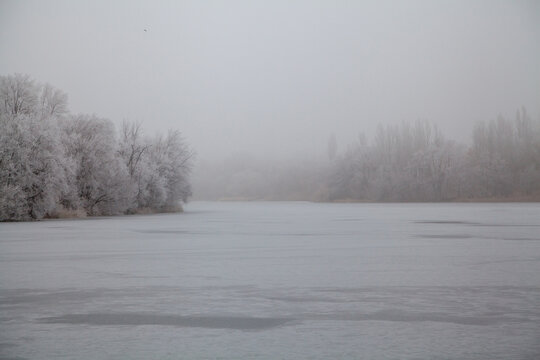 Tall trees grow on banks of frozen pond