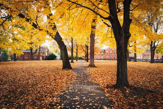 Colorful Autumn Leaves in Bethlehem, Pennsylvania