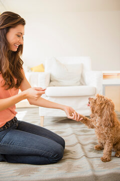 Caucasian woman teaching pet dog to shake