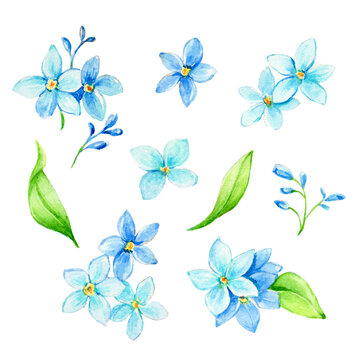 Set of watercolor Forget-me-not flowers. Element for design of invitations, movie posters, logo,