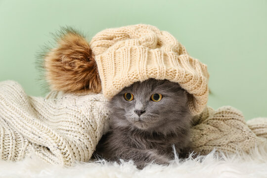 Cute cat with knitted hat under warm plaid on color background. Concept of heating season