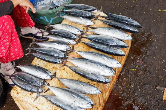 fresh fish in the street market