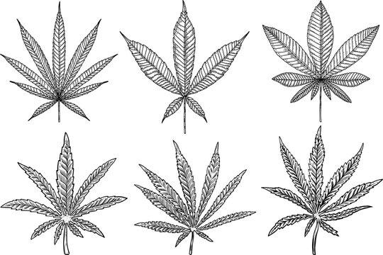 Set of Illustrations of marijuana leaf in engraving style. Design element for poster, card, banner, sign. Vector illustration