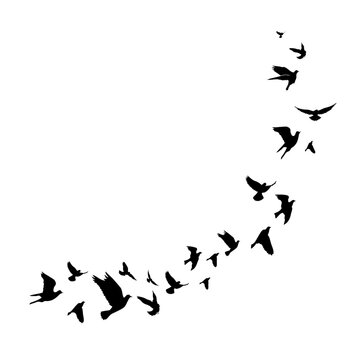Flying birds silhouette illustration. Vector background