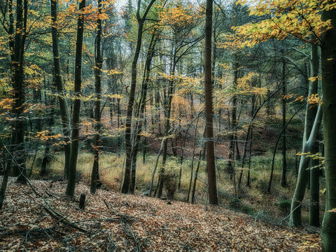 Mysterious forest in autumn garb