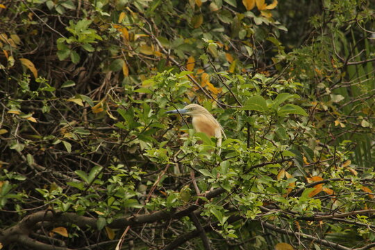 Bird in Akagera, Rwanda