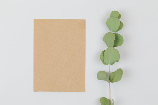 Craft card with a branch of eucalyptus on a white background. Wedding invitations. Greeting card. Space for an inscription. Empty space. Styled stock photo, web banner. Flat lay, top view.