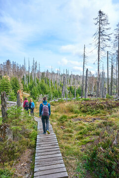 Landscape of Harz National Park in Germany - Dying woods, moors and footpaths.