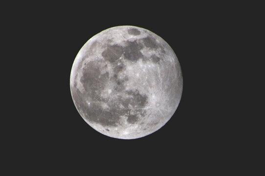 Luna argentata
