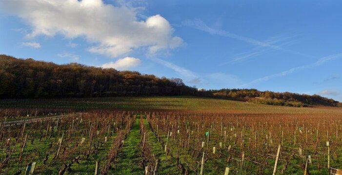 Panorama d'un vignoble en Bourgogne.