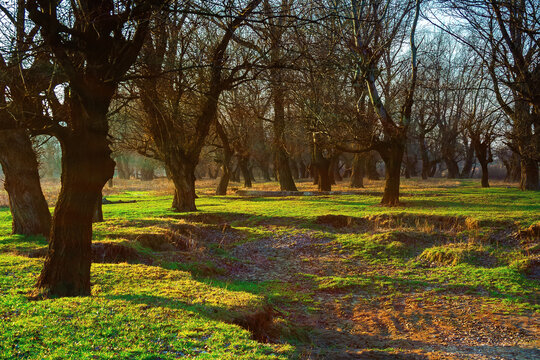 leafless trees in the park at sunrise. green grass on the ground in morning light. calm nature scenery in springtime