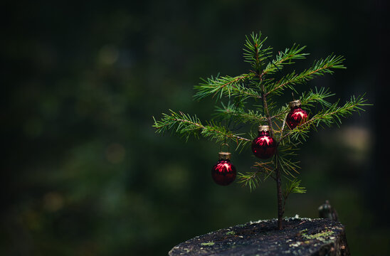 Christmas tree with ornaments in the middle of the forest.