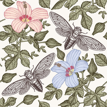 Hibiscus cicadas fly Flowers mallow insects fauna Seamless Pattern Drawing engraving isolated Freehand realistic Beautiful background blooming flowers. Floral baroque Vintage Victorian illustration