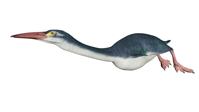 Hesperornis prehistoric bird isolated in white background - 3D render