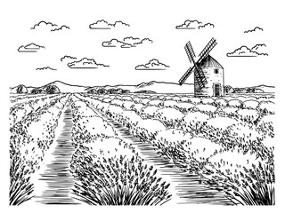 A sketch of lavender fields. French countryside landscape in Provence. Creates a summer mood.