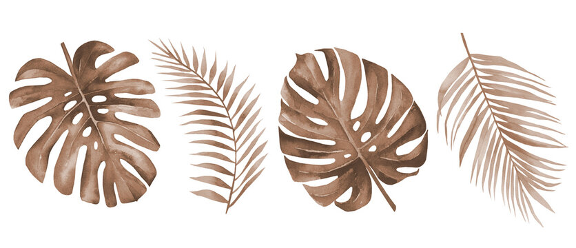 Dry palm leaves. Dried tropical monstera and palm leaf set. Terracotta plants. Watercolour illustration isolated on white background.