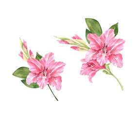 set of watercolor illustrations with pink flowers lilies on a white background, hand painted on a white background