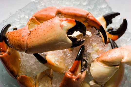 Stone crab claws. Colossal Crab claws served with lemons, spicy rémoulade sauce on top of a mixed green salad. Classic American restaurant or steakhouse appetizer or entree.