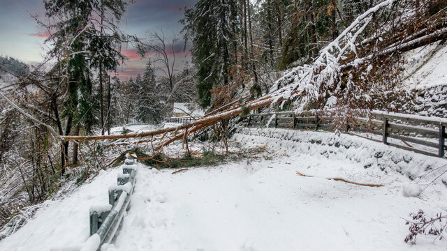 Trees broke under the weight of wet snow and blocked the road in winter time. Danger of sudden climate change on the Dolomites. Snow blockages the publici road afther a snowfall.