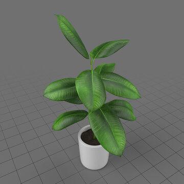 Decorative potted plant 3