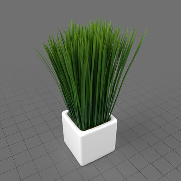 Decorative potted long grass