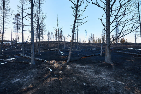 Granby Fire, East Troublesome Fire, Granby Colorado, Lake Granby, Lake Granby Fire, Wildfires, Colorado wildfire season, charred, fire damage, scortched earth
