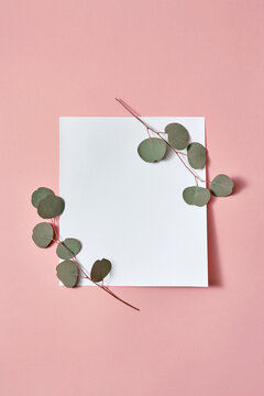 Square paper card with corner twigs of green Eucalyptus plant.