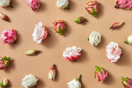 Decorative pattern from rose flowers.