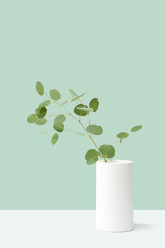 Twig of fresh Eucalyptus plant in a vase.