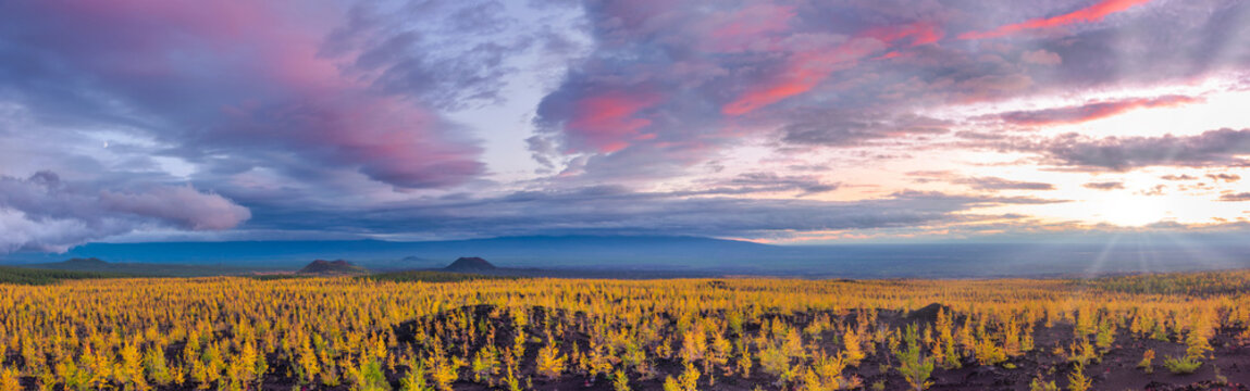 Panoramic scenery with sunset sky above recovered dead forest, Kamchatka.