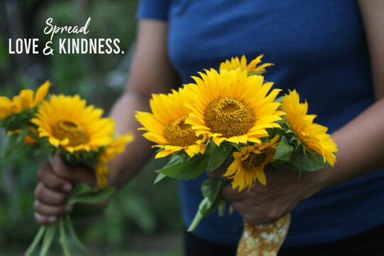 Inspirational quote - Spread love and kindness. With young woman hands holding beautiful bouquet of yellow sunflowers. Sharing is caring and humanity concept.