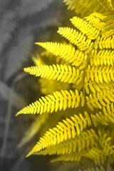 Forest fern toned in trending colors 2021