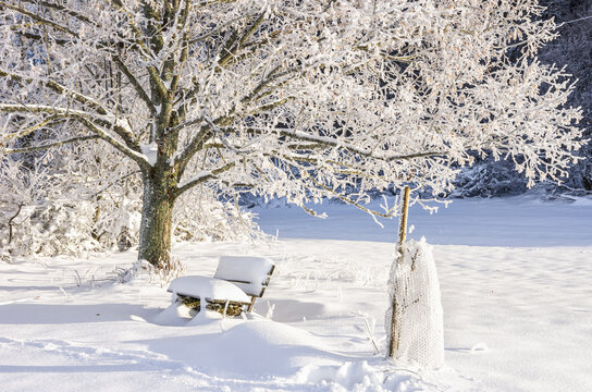 Snow-covered tree with bench - Snow-covered tree with bench in a winter scenery.