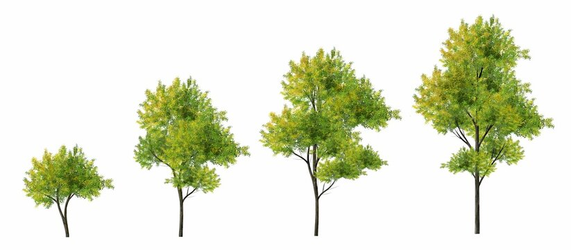 Collection of abstract watercolor green tree side view isolated on white background  for landscape and architecture layout drawing, elements for environment and garden