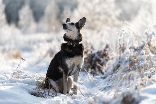 Portrait of mongrel dog. Allegiance