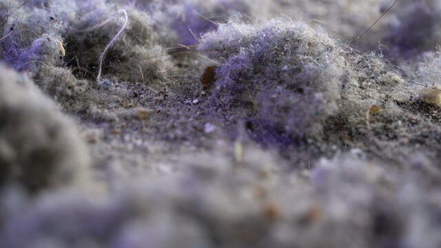 Macro dust shots with hair. The pollution that the vacuum cleaner collects when cleaning an apartment or house.