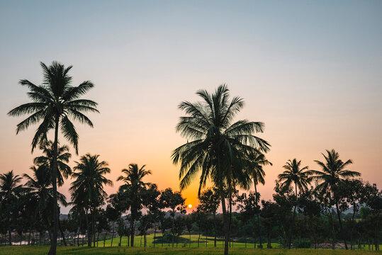 India, Karnataka, Hampi, Palm trees surrounding rice paddy at sunset